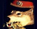 "На территории Запорожской области орудуют ""оборотни"" в погонах."